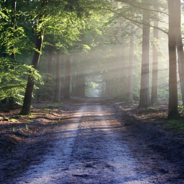 country road, trees on each side with rays of sunlight shining through