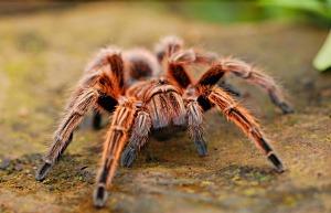 spider-2740997_1920
